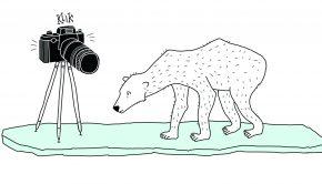 Illustratie Wendy Panders uit het kinderboek 'Palmen op de Noordpool'